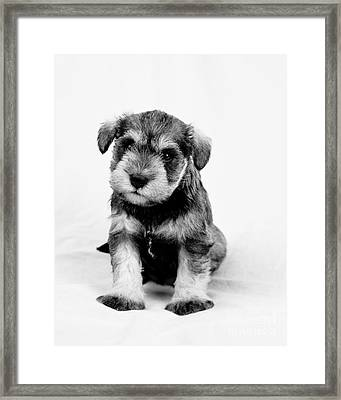 Cute Puppy 1 Framed Print