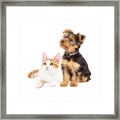 Cute Puppy And Kitten Sitting To Side  Framed Print by Susan Schmitz