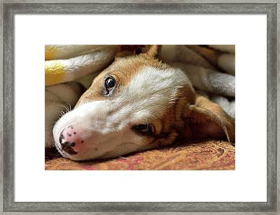 Cute Puppy Cuddles Framed Print
