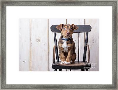 Cute Puppy Dog On A High Chair Framed Print by Edward Fielding
