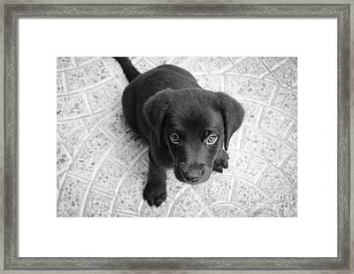 Cute Puppy Dog Framed Print by Edward Fielding