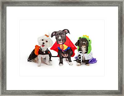 Cute Puppy Dogs Wearing Halloween Costumes Framed Print by Susan Schmitz