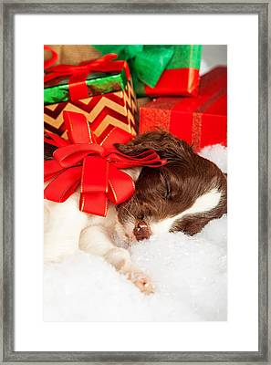 Cute Puppy With Red Bow Sleeping By Gifts Framed Print