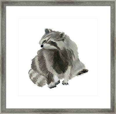 Cute Raccoon Framed Print
