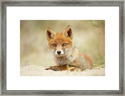 Cute Red Fox In Chill Modus Framed Print by Roeselien Raimond