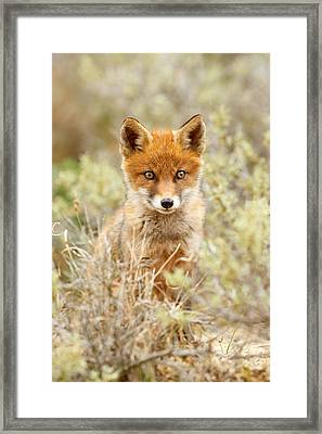 Cute Red Fox Kit Framed Print