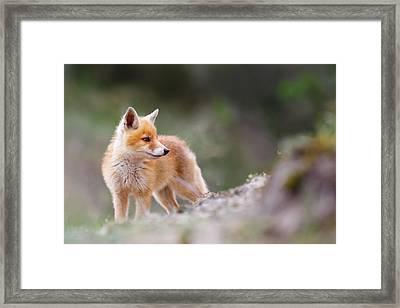 Cute Red Fox Framed Print