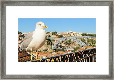Cute Seagull And Porto's Cityscape Framed Print