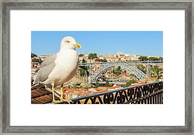Cute Seagull And Porto's Cityscape Framed Print