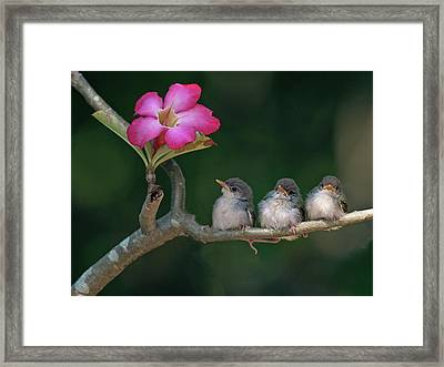 Cute Small Birds Framed Print by Photowork by Sijanto