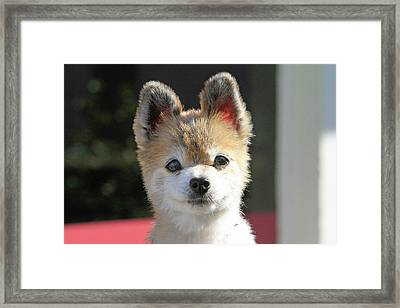 Cute Stare Down Framed Print