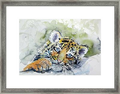 Cute Tiger Cub Framed Print by Kovacs Anna Brigitta