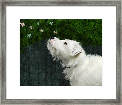 Cute White Jack Russel Dog Framed Print