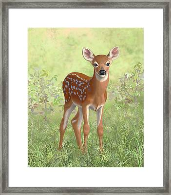 Cute Whitetail Deer Fawn Framed Print by Crista Forest
