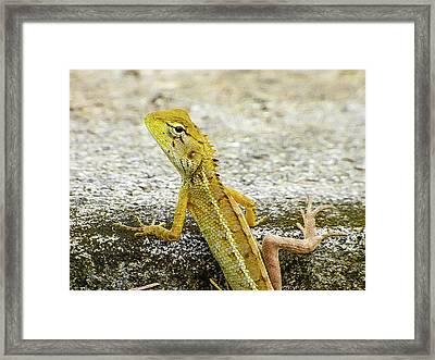 Cute Yellow Lizard Framed Print
