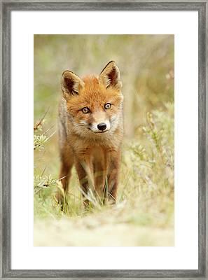 Cute Young Red Fox Cub Framed Print