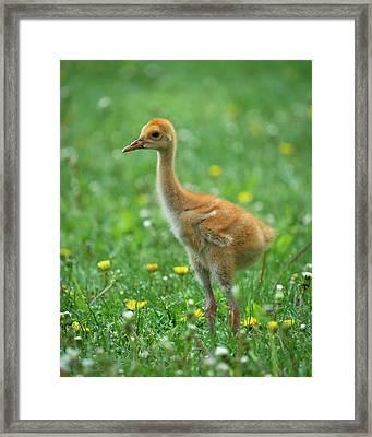 Cuteness Framed Print