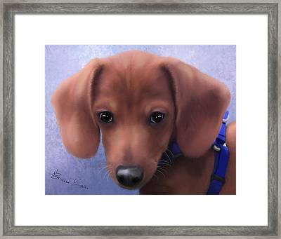 Cuteness Overload Framed Print by Sannel Larson