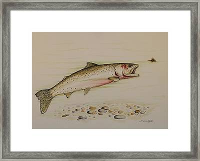 Cutthroat Trout Framed Print by Jeff Harrell