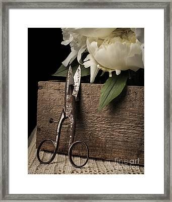 Cutting Flowers Framed Print by Edward Fielding