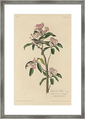 Cuvier's Wren Framed Print by Dreyer Wildlife Print Collections