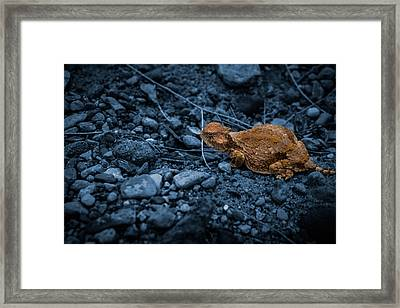 Cyanotype Horned Toad Framed Print