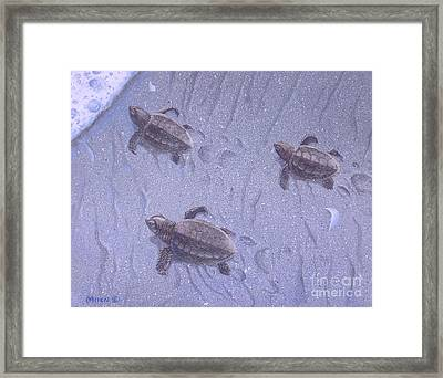 Cycle Of Life Three Framed Print by Michael Allen
