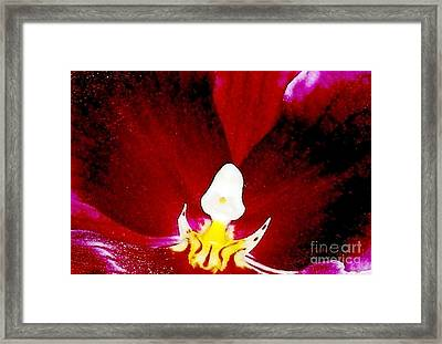 Cymbidium Orchid Very Close Framed Print by Jennifer Pevos