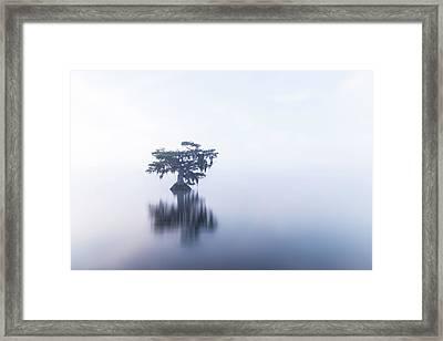 Cypress In Heavy Fog Framed Print