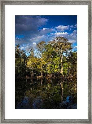 Cypress And Oaks Framed Print by Marvin Spates