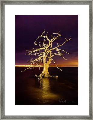 Cypress At Sunset 2860 Framed Print by Dan Beauvais