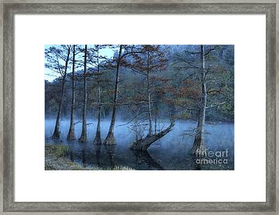Framed Print featuring the photograph Cypress Awakening by Tamyra Ayles