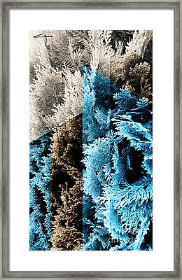 Cypress Branches No.3 Framed Print