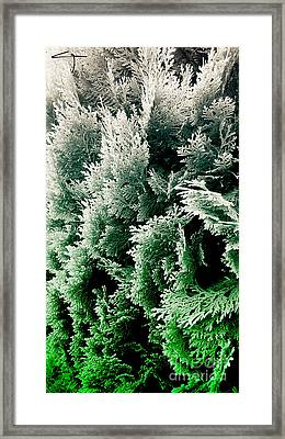 Cypress Branches No.5 Framed Print