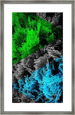 Cypress Branches No.6 Framed Print by Cesar Padilla