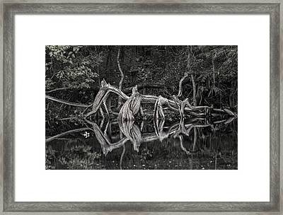 Framed Print featuring the photograph Cypress Design by Steven Sparks