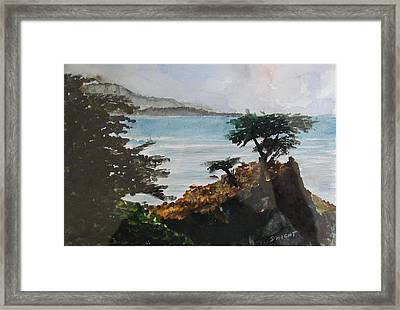 Cypress Framed Print by Dwight Williams