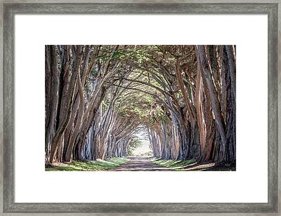 Framed Print featuring the photograph Cypress Embrace by Everet Regal