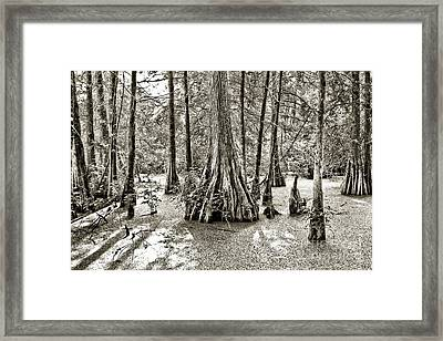 Cypress Evening Framed Print by Scott Pellegrin