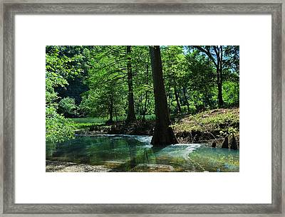 Cypress Forest In Summer Framed Print by Iris Greenwell