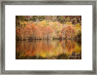 Cypress Forest In The River Framed Print