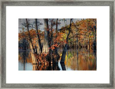Cypress Group  Framed Print