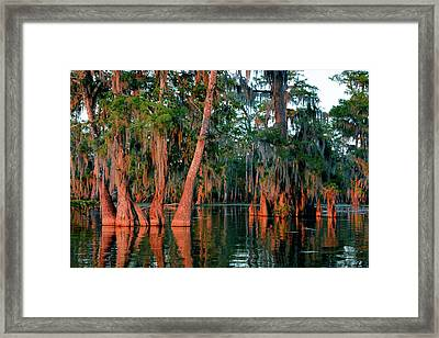 Framed Print featuring the photograph Cypress Grove by Nicholas Blackwell
