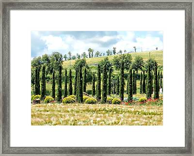 Cypress Heaven Framed Print