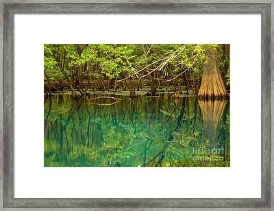 Cypress In Manatee Framed Print by Adam Jewell