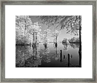 Cypress In Walkers Mill Pond Framed Print by Bob Decker