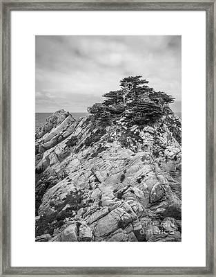Cypress Island Framed Print by Alexander Kunz