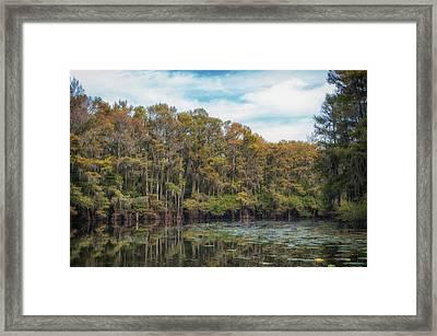 Cypress Jungle Framed Print