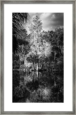 Cypress King Framed Print by Marvin Spates