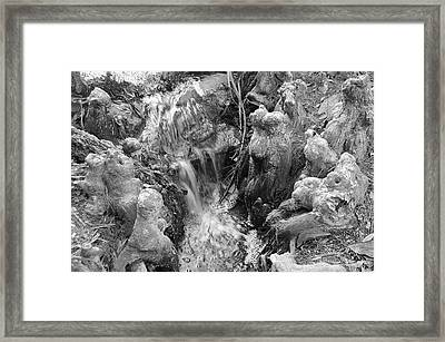 Cypress Knees II Framed Print by Suzanne Gaff